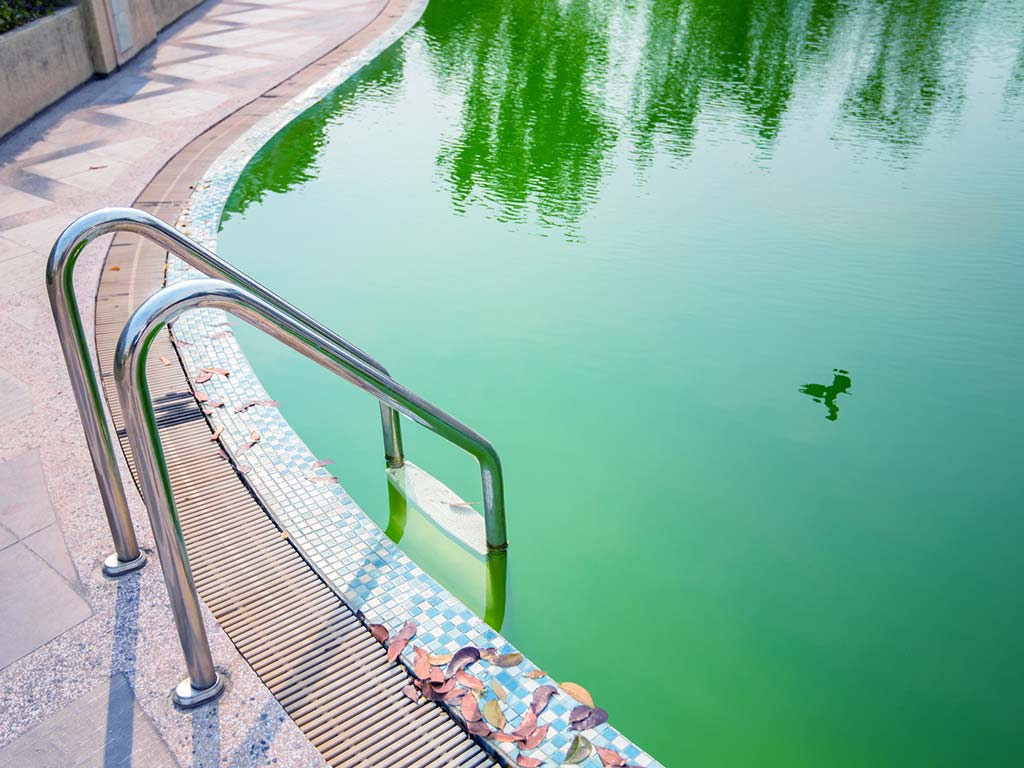 henderson algae removal pool services