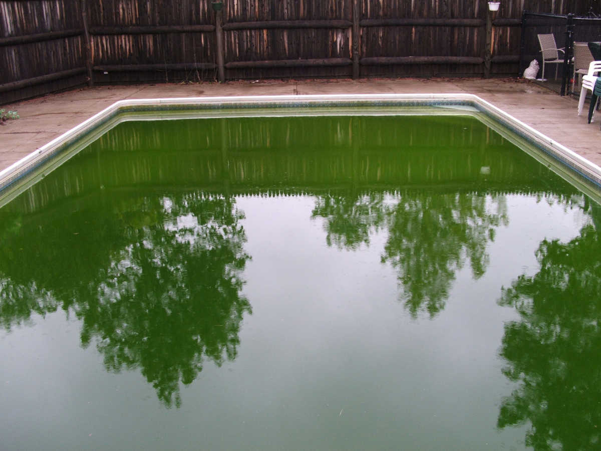 green algae in pool