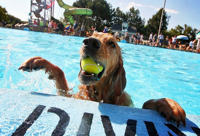 pet pool safety tips