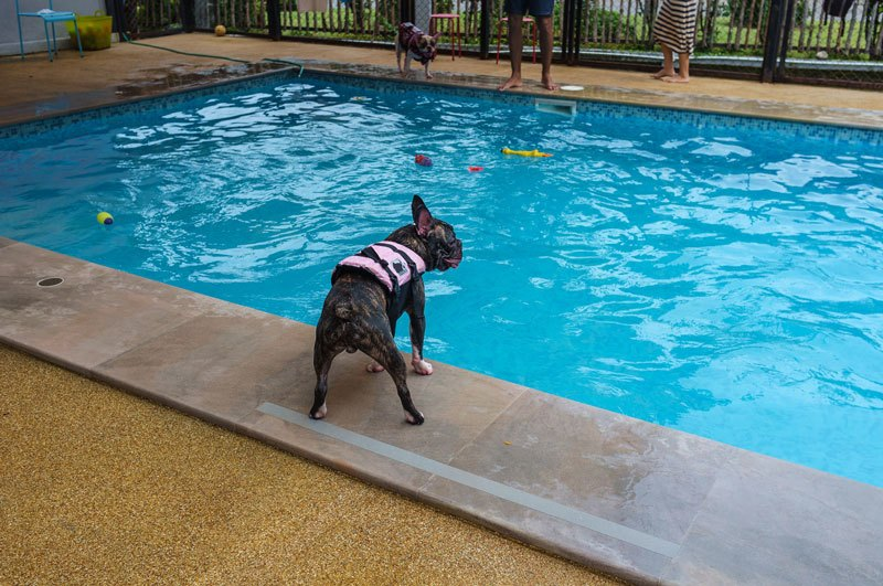 pool safety tips dog life jacket